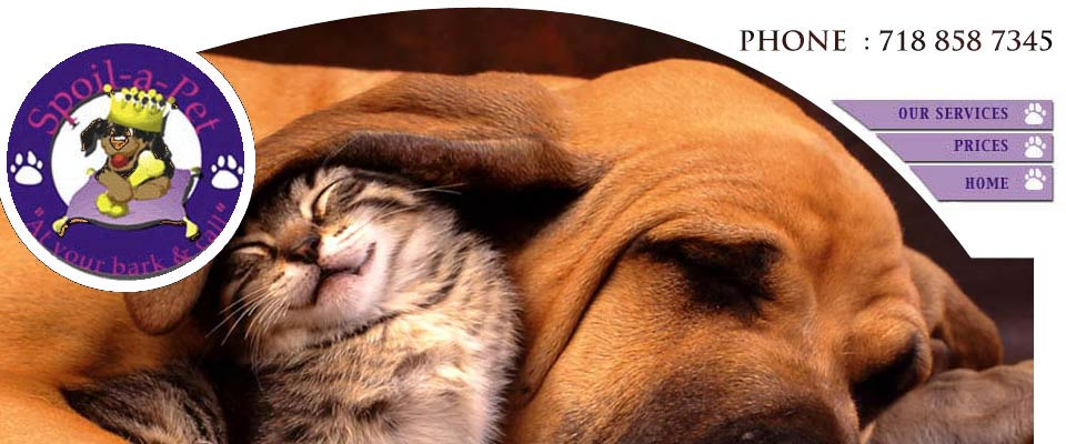 Spoil A Pet